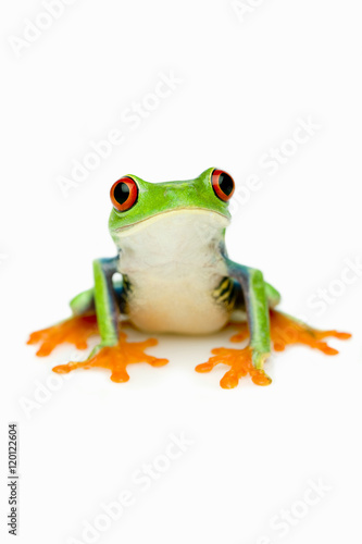 Green Frog Portrait