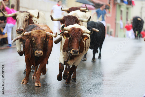 Poster Bulls and people are running in street