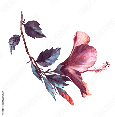 obraz lub plakat Hand-drawn watercolor floral illustration of the tender white with pink hibiscus flower. Natural drawing isolated on the white background. Romantic blossom