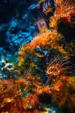 Fototapeta Do akwarium - Podwodny tropikalny świat w niezwykłych kolorach © Marek AGInt