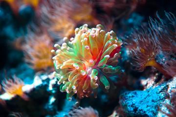 Podwodny tropikalny świat w niezwykłych kolorach