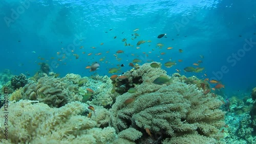 Poster Water planten Underwater coral reef in ocean with tropical fish