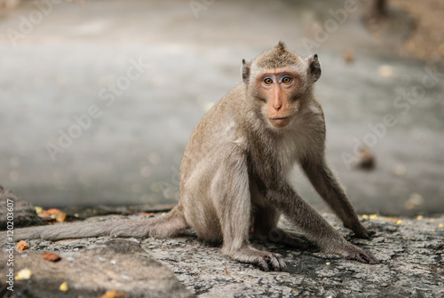 Poszter monkey sits on the stone and eats