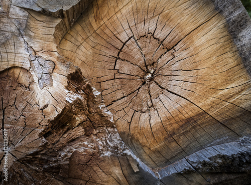 bois matière texture tronc tranche fendu arbre noeud bûcheron