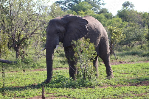 Plakát, Obraz Elephant in the wild