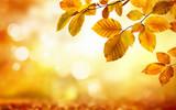Gelbe Blätter im Herbst verzieren einen unscharf leuchtenden Hintergrund in der Botanik