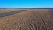 Slow flight over a sunflower fields. Aerial shot.