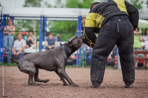Fotobehang Palermo dog competition, police dog training, dogs sport