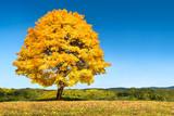 Herbstlandschaft mit Baum