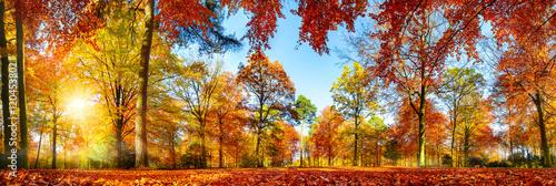 Panorama von bunten Bäumen bei strahlendem Sonnenschein im Herbst
