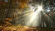 Wald mit Nebel und Sonnenstrahlen im Herbst, Timelapse Video