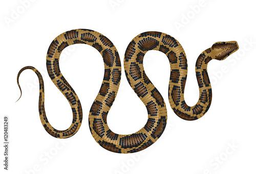 Python vector illustration. Tropical snake isolated on white.