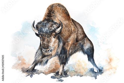 Watercolor bison illustration - 120527635