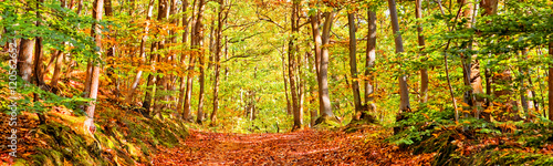 Path in a forest on a sunny autumn day, panorama - 120562652