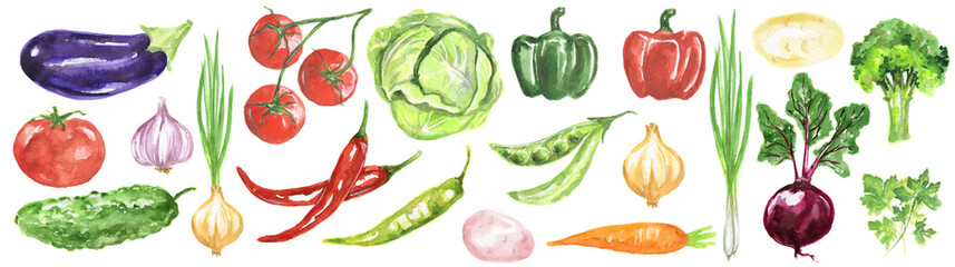 Watercolor vegetables set. Fresh and healthy vegetables on white background. Great source of vitamin. Eggplant, tomato, chili and more. © artinspiring