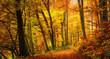 Wald im Herbst in angenehm warmen Farben, ein Weg führt in die Szene hinein