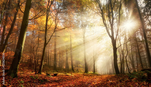Faszinierende Lichtstimmung in einem bunten Wald im Herbst bei Sonnenschein im Nebel