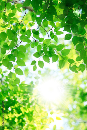 Fotobehang Zwavel geel 新緑の葉っぱ