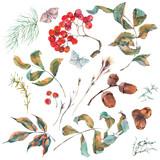 Set of watercolor rowan branches