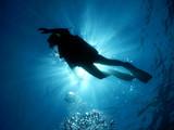 Diving - 120666091