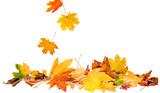 autumn leaves - 120670039