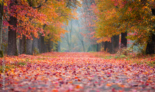 Fotobehang Herfst Autumn Park path covered in fallen coloured leaves