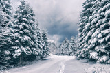 Winter view in a Carpathian mountain