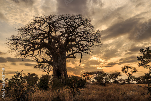 Foto op Canvas Baobab Baobab Tree at Sunset, Tanzania