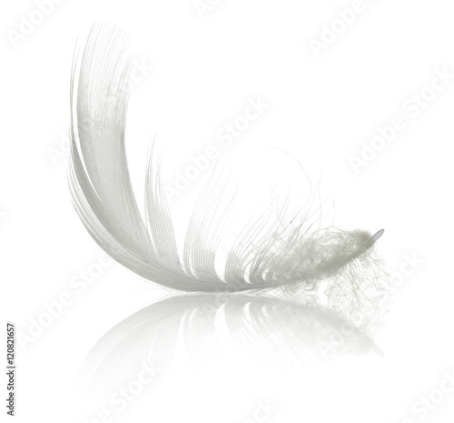 White swan feather with reflection. Isolated on white background - 120821657