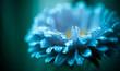 open blue flower with rain drops