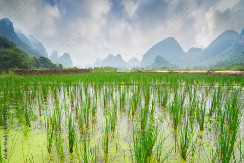 Papiers peints Guilin Rice field and mountains - typical landscape in Yangshuo, Guilin, China. Selective focus.
