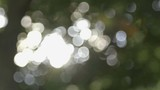Spots of light coming through the trees and glimmering as the branches move above.