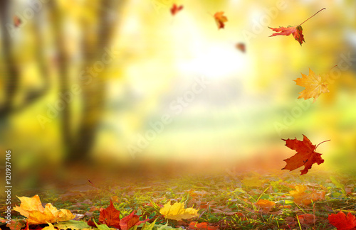 Foto op Canvas Herfst Beautiful landscape with yellow trees,green grass and sun.