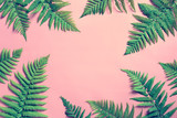 Summer tropical background, fern leaves - 120947253