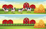 Farm scenes with cows and barns