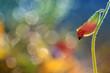 Small red ladybird
