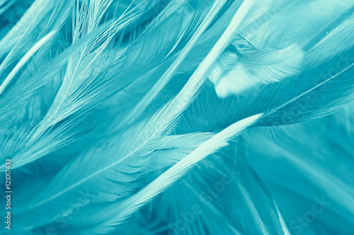 Fototapeta Bohemian boho style green turquoise vintage color trends chicken feather texture background