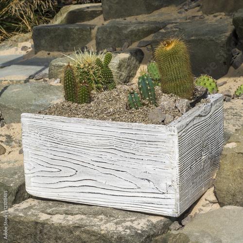 Zdjęcia stylowa skrzynka z kolekcją kaktusów w ogrodzie