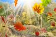 Herbst 159