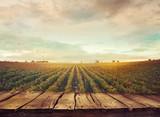 Fototapety Vineyard in autumn