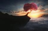Cherry tree on mountain