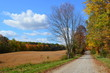 Country road & golden field on a sunny Autumn day