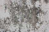 Grunge cement wall, For texture and background.