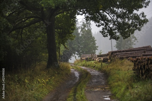mist and rain in the forest with wood piles