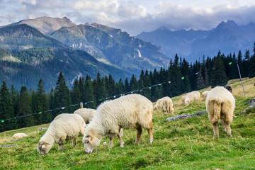 Rusinowa Polana in Tatra Mountain, Poland
