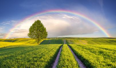 Tęcza nad wiosennym,zielonym polem © Mike Mareen