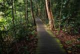 Mossy path through a Singapore Jungle