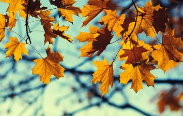 autumn leaves on sky