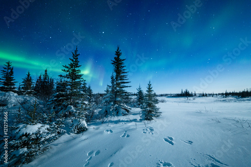 Aluminium Noorderlicht Snowshoe Hare Tracks And The Aurora Borealis