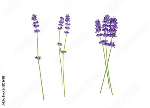 Lavender flowers isolated on white  - 121286418